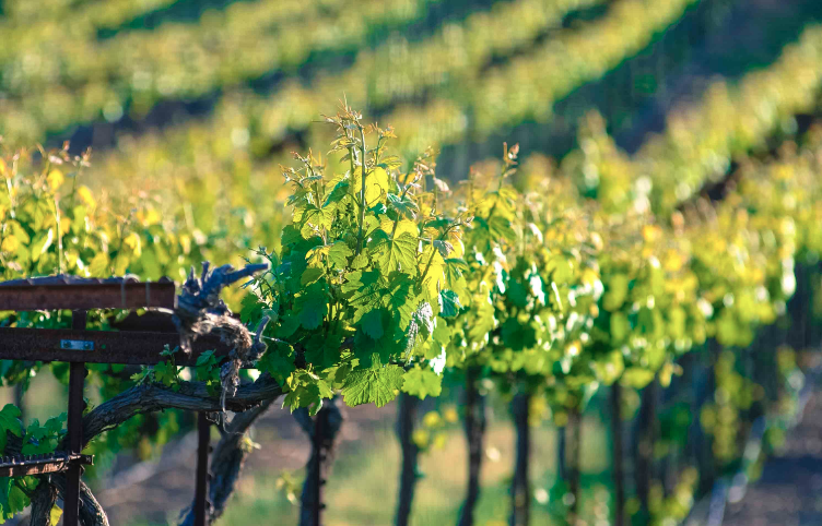 beautiful wine tours in the town